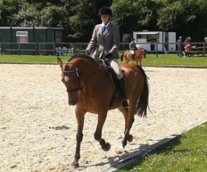 Unaffiliated Dressage Competition @ Water Farm | Raydon | England | United Kingdom