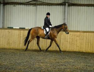 Unaffiliated Dressage Competition @ Water Farm | Raydon | England | United Kingdom